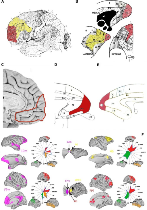 Anatomy and connectivity of prefrontal cortex (PFC) in | Open-i