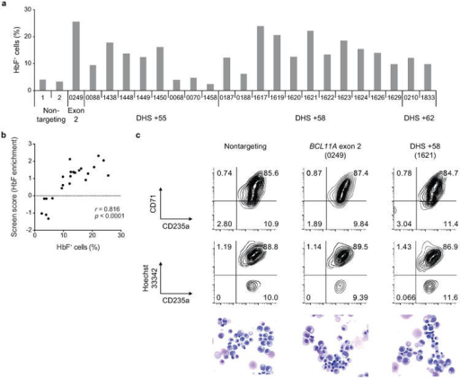 Validation of enhancer screena, HbF+ fraction in HUDEP-2 cells transduced in arrayed format with 24 sgRNAs from all 5 mapping categories with enrichment scores ranging from the highest to the lowest in the screen. b, Correlation between HbF enrichment score from pooled sgRNA screen and HbF+ fraction by arrayed validation of individual sgRNAs in HUDEP-2 cells. c, Erythroid differentiation of primary human erythroid precursors evaluated by CD71 and CD235a surface markers, enucleation frequency (CD235a+ Hoescht33342-), and morphology by May-Grünwald-Giemsa staining.