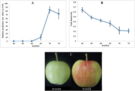 Fruit firmness and ethylene production in apple 'Taishanzaoxia' during the fruit development period.(A) Ethylene production rate, (B) Fruit firmness, (C) Samples used for SSH construction.