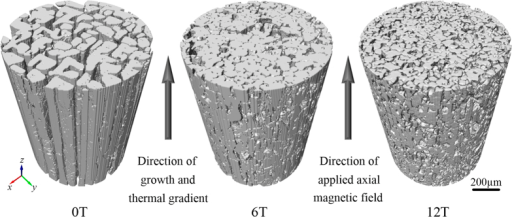 3D morphology of primary Al2Cu column solidified under different magnetic field flux intensities at the growth rate of 2 μm/s and thermal gradient of 6000 K/m.