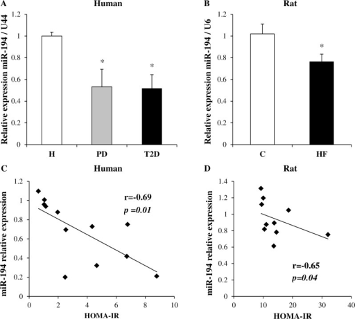 miR-194 expression in the skeletal muscle of human participants and rat offspring and correlations with HOMA-IR.miR-194 expression was validated by qPCR in human (A) and rat samples (B) (n = 4–6 per group). Values are expressed as mean ± SEM. P-values were determined using 1-way ANOVA followed by Student-Newman-Keuls post-hoc test for human data (*p<0.05 vs healthy), or Student's t-test for rat data (*p<0.05 vs control). Correlation between miR-194 expression and HOMA-IR in human (C) and rat (D) was assessed using Pearson's or Spearman's correlation test as appropriate. R and p-values are indicated on the graphs.