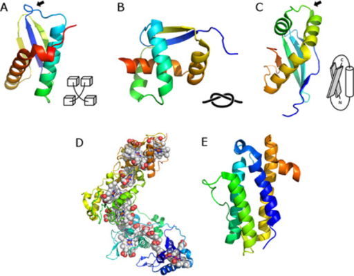Examples Of Proteins With Unusual Topologiesa Loop Cr Open I
