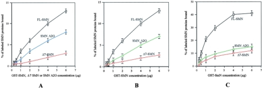 In vitro binding studies on SMN A2G. (A) Self-association studies between 35S-labeled SMN proteins and bound GST–SMN fusion proteins. (B) The interaction of SMN A2G, FL-SMN, and Δ7 SMN each with FL-SMN. (C) Binding of FL-SMN, SMN A2G, or Δ7 SMN (as indicated) with the Sm protein SmN. In all three studies, binding values were calculated as a % of 35S-labeled SMN A2G, FL-SMN, or Δ7 SMN.