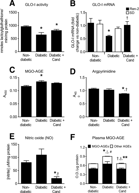 "GLO-I activity and mRNA, and MGO-AGE levels in diabetic Ren-2 rats. In Ren-2 rats after 4 weeks of diabetes, retinal GLO-I activity (A) is reduced compared with nondiabetic control and tends to be restored with Cand, although this is not significant (*P < 0.03 vs. nondiabetic Ren-2 control). In Ren-2 rats after 20 weeks of diabetes, retinal GLO-I mRNA (B) is clearly reduced compared with nondiabetic control and is restored to control levels with Cand (*P < 0.005 vs. nondiabetic Ren-2 control, †P < 0.05 vs. diabetic Ren-2 control). In comparison, in Sprague-Dawley (SD) rats (B), no changes in retinal GLO-I mRNA are observed with 20 weeks of diabetes. In Ren-2 rats after 4 weeks of diabetes, the reduction in retinal GLO-I activity (A) is accompanied by an increase in the levels of retinal MGO-AGE (C), (*P < 0.01 vs. nondiabetic Ren-2 control). In diabetic Ren-2 rats, Cand tends to decrease the levels of retinal MGO-AGE, but this is not significant. In diabetic Ren-2 rats at 4 weeks, the levels in retina of the specific MGO-AGE, argpyrimidine (D), and NO• levels (E) are unchanged compared with nondiabetic controls; however, Cand reduced retinal argpyrimidine (*P < 0.05 vs. nondiabetic Ren-2 control, †P < 0.01 vs. diabetic Ren-2 control) and NO• levels (*P < 0.05 vs. nondiabetic Ren-2 control. †P < 0.01 vs. diabetic Ren-2 control). F: Plasma MGO-AGEs (black bars) are increased in Ren-2 rats after 20 weeks of diabetes compared with nondiabetic controls and are reduced with Cand to nondiabetic levels (*P < 0.05 vs. nondiabetic Ren-2 control; †P < 0.05 vs. diabetic Ren-2 control). Other AGEs (non-MGO AGEs, white bars) and total AGEs (MGO-AGE + other AGEs, black + white bars) were increased in Ren-2 rats after 20 weeks of diabetes and reduced with Cand to nondiabetic control levels (‡P < 0.005 versus ""other AGE"" nondiabetic Ren-2 control; §P < 0.04 versus ""other AGE"" diabetic Ren-2 control; #P < 0.02 versus ""total AGE"" nondiabetic Ren-2 control; **P < 0.02 versus ""total AGE"" diabetic Ren-2 control). N = 5–8 animals/group. Values are mean ± SEM. Data in panels C and D were analyzed by one-way ANOVA, followed by Bonferroni post hoc tests. All other datasets in this figure were analyzed by Kruskal-Wallis tests, followed by Mann-Whitney U tests."