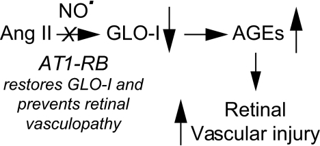 Proposed mechanism by which Ang II downregulates GLO-I in retinal vascular cells, leading to the generation of AGEs and vascular injury. The AT1-RB, Cand, is able to prevent diabetic retinal vascular injury by reducing nitric oxide and restoring GLO-I levels.