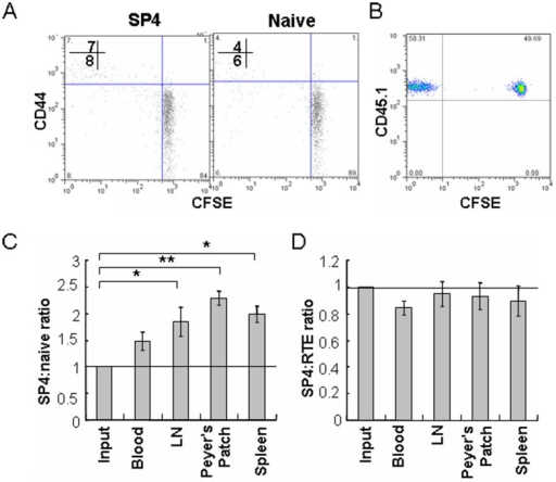 Comparison of the survival of pre-RTEs (SP4 in adult animals) and naïve T cells in mice.(A) Purified SP4 thymocytes, and CD4+ naïve T cells from lymph nodes of C57BL/6 mice were labeled with CFSE and adoptively transferred into unirradiated adult C57BL/6 mice. Donor T cells from lymph nodes (LN) of the hosts were analyzed for CD44 expression and CFSE dilution (proliferation) 7 days later. The numbers in the plot display the percentage of CD44hi (upper) and CD44lo (lower) cells that diluted CFSE. (B) Unlabeled SP4 thymocytes (pre-RTEs) and CFSE-labeled CD4+ naïve T cells of CD45.1 congenic mice were mixed at 1:1 ratio and were adoptively transferred into CD45.2 C57BL/6 mice. Seven days later, the mice were sacrificed and cells were harvested from peripheral blood, lymph nodes, peyer's patch, and spleen. Donor cells collected from host lymph nodes were shown as CD45.1+CFSE+ (naïve T) and CD45.1+CFSE- (SP4). (C) The ratio of SP4 and naïve T cells (gated as (B)) after seven days of adoptive transfer was calculated. (D) Unlabeled SP4 thymocytes and CFSE-labeled GFP+CD4+CD8- lymph node cells (RTEs) from CD45.2 mice were mixed at 1:1 ratio and were transferred into CD45.1 mice. The donor cells were gated at CD45.2+CFSE+ (RTEs) and CD45.2+CFSE- (SP4) and the ratio was analyzed 7 days later. The experiments were repeated twice and similar results were obtained. Error bars represent SEM. *P<0.05, **P<0.01, using an unpaired Student's t test. N = 3-4 mice per group.