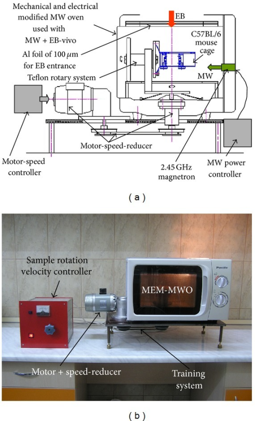(a) Schematic drawing of the MEM-MWO; (b) photograph of the MEM-MWO.