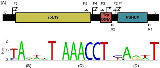 Schematic presentation of the genomic region around the PSHCP gene.Panel A. Mapping of promoters and primers onto the region. In all examined picocyanobacterial genomes the upstream region consists of the ribosomal protein L19 (rpL19) and tryptophanyl-tRNA genes. The locations of predicted promoters are shown by bent arrows, while the locations of the reverse (R1) and forward (F1 to F6) primers used for RT-Q-PCR analysis are indicated by half arrows (see Table S1 for further details). Panels B–D. Conservation of predicted and experimentally determined promoters across homologous regions from 18 Prochlorococcus marinus and Synechococcus spp. genomes. The regions were visualized using the WebLOGO web site (http://weblogo.berkeley.edu/). Panel B. Conservation of experimentally determined promoters from Prochlorococcus marinus MED4 [23]. Panel C. Conservation of predicted promoter located 37 bases into the trp-tRNA gene. Panel D. Conservation of the predicted promoter in the 5′ region 12–14 bases upstream of the PSHCP start codon. This promoter is present in all analyzed genomes except Synechococcus sp. RCC307. For promoters predicted upstream of the trp-tRNA and rpl19 genes (panel A) WebLOGOs are not shown.