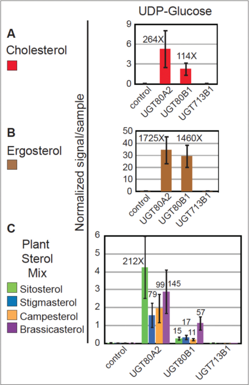 In vitro substrate specificity of UGT80A2 and UGT80B1 enzymes. (A–C) Yeast microsomes expressing the empty vector control, UGT80A2, UGT80B1, or UGT713B1 were incubated with sterol and UDP-glucose substrates. Reaction products were analysed by ESI-MS/MS and normalized signals per sample are shown. Error bars indicate standard deviations for n=3. Glucosylated sterols were detected for UGT80A2 and UGT80B1, but not for UGT713B1. Signals from the empty vector control ranged from 0.001 to 0.043 (Supplementary Table S6). Fold changes over the negative control were calculated using an average value of 0.020 for the control, and each fold-change represents a significant increase in activity over the control (P≤0.05). (A) UGT80A2 and UGT80B1 expression resulted in glucosylated cholesterol when using UDP-glucose as the substrate. (B) UGT80A2 and UGT80B1 displayed high activity with endogenous ergosterol for the UDP-glucose substrate. (C) UGT80A2 and UGT80B1 formed sitosteryl, stigmasteryl, campesteryl and brassicasteryl glucosides utilizing UDP-glucose in combination with a sterol mixture containing the corresponding sterols.