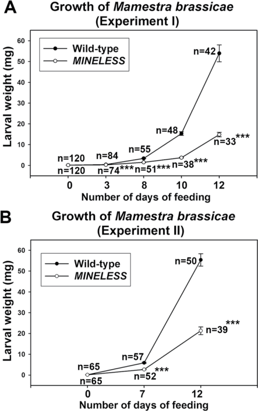 Growth of M. brassicae on wild-type and MINELESS plants in no-choice feeding experiments. (A, B) The weights of larvae feeding on wild-type and MINELESS seedlings differed significantly for day 3, 8, 10, and 12 (A); and day 7 and 12 (B). n, number of larvae. Values represent mean ± SE; ***, P < 0.001 (Wilcoxon Mann-Whitney test).