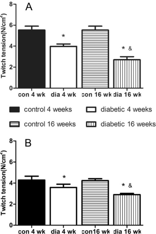 Twitch tension height elicited by indirect stimulation in Extensor digitorum longus (EDL, A) and Soleus (SOL, B). There was a significant difference between diabetic groups and the age-matched control groups (p<0.05), and between dia 4 wk and dia 16 wk groups (p<0.05), while no significant difference between con 4 wk group and con 16 wk group. *p<0.05 versus control groups, &p<0.05 versus diabetic 4 weeks group. con 4 wk, control 4 weeks group; dia 4 wk, diabetic 4 weeks group; con 16 wk, control 16 weeks group; dia 16 wk, diabetic 16 weeks group.