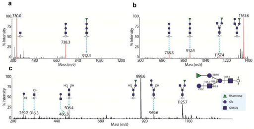 Mass spectrometric analysis of rFap1 glycanThe glycans were reductively eliminated from the protein, and permethylated.Derivatized glycans were purified on reverse phase C18 Sep-Pak® columns. The MALDI-TOF spectra of the 35% acetonitrile (MeCN) eluate (a), the 50% MeCN eluate (b), and MALDI-TOF/TOF spectrum of the peak at mass-to-charge ratio (m/z) 1361.6 (c) are shown. In spectra (a) and (b), peaks corresponding to sodiated glycans are colored red and annotated with m/z and glycan structures. Other black signals are due to under-permethylation (minus 14 in m/z) or contaminations from the matrix. In spectra (c), peaks corresponding to diagnostic fragments are annotated with m/z and glycan structure. Notably, the peak at m/z 506.4 corresponds to a double-cleaved fragment, indicating the fully synthesized glycan is branched.
