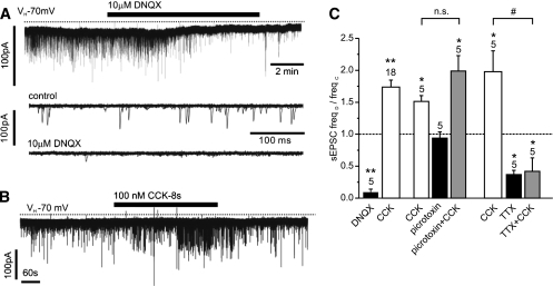 CCK stimulation of sEPSCs is sensitive to TTX but not picrotoxin. A: The vast majority of sEPSCs in PPG neurons are glutamatergic, as demonstrated by their inhibition by 10 μmol/L DNQX in this voltage-clamp recording at a holding potential of −70 mV. Bottom traces: Overlay of 15 consecutive 500 ms traces from the recording above under control conditions (top) and in the presence of DNQX (bottom). B: CCK-8s, bath-applied at 100 nmol/L, led to an increase in sEPSC frequency. C: Mean normalized effects of CCK on sEPSC frequency in the presence or absence of various drugs. The mean sEPSC frequency in presence of the drug (freqD) as a fraction of the frequency in the absence of any drug (freqC) is plotted. The excitatory CCK effect is not reduced by the GABA and glycine receptor antagonist picrotoxin (30 μmol/L) but is prevented by TTX (0.5 μM). *P < 0.05 compared with control; **P < 0.01 compared with control; #P < 0.05 compared with CCK. Numbers of cells tested are given above the bars.