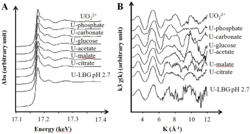 Uranium speciation in the exposure medium.Uranium LIII-edge XAS spectra (A), normalized to equal intensity at 17.176 keV; and k3-weighted EXAFS curves (B) of uranyl acetate 50 µM prepared in LB-glucose medium at pH 2.7 (U-LBG pH 2,7) compared to reference spectra.