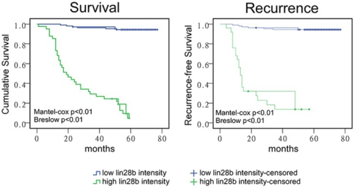 LIN28B overexpression correlated with reduced patient survival and an increased likelihood of tumour recurrence.(A) Higher LIN28B staining intensity from stage I, II and III colon cancers correlated with reduced patient survival. (B) High LIN28B expression was related to a higher probability of tumour recurrence (p<0.01; log rank test).