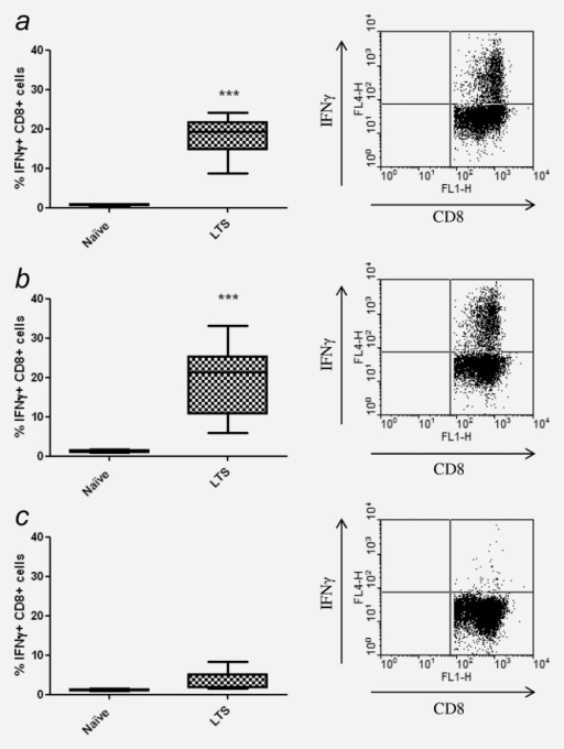 Combination therapy with IR and DSR-6434 elicits a tumor antigen-specific memory T-cell response in long-term surviving mice. (a)–(c) Splenocytes were isolated from tumor/treatment-naïve control mice (n = 3) and from long-term surviving (LTS) mice that had remained tumor free for greater than 90 days following DSR-6434/IR combination treatment (n = 5), and were co-cultured with 50-Gy-irradiated CT26 cells (a), AH1 peptide (b) or control peptide (c) for 6 days prior to restimulation with fresh 50-Gy-irradiated CT26 cells. The expression of IFNγ by CD8+ T cells was measured by flow cytometry. Representative plots of IFNγ expression by CD8+ T cells from LTS mice are shown to the right of each graph. ***p < 0.001, two-tailed Student's t-test.