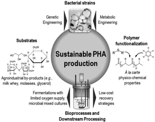 Strategies used to enhance the sustainability of polyhydroxyalkanoates (PHA) production processes, originally published in [21] under CC BY 3.0 license.