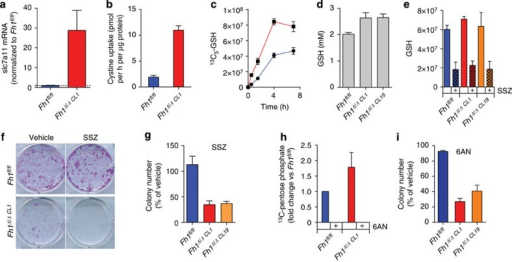 GSH succination triggers cystine uptake and GSH biosynthesis.(a–c) The loss of FH leads to the upregulation of the cystine transporter (a), increased cystine uptake (b) and accelerated GSH biosynthesis traced from 13C5-glutamine (c). (d) The steady-state pool of GSH is increased in FH-deficient cells. (e,f,g) Sulfasalazin (SSZ) inhibits GSH biosynthesis in both wt and FH-deficient cells (e) but selectively impairs cell survival and growth of FH-deficient cells (f,g). (h,i) 6-Aminonicotinamide (6-AN), an inhibitor of the PPP, inhibits pentose phosphate production in both cell lines as assessed by tracing 13C6-Glucose (h), selectively affects the proliferation of FH-deficient cells (i). The images in f are the representative images of triplicate cultures. Results were obtained from three independent experiments and represented as average±s.e.m.