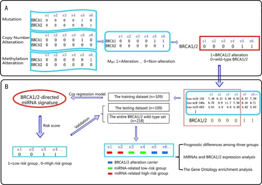 Schematic overview of our analysis procedureA. By integrating the mutation profile, copy number variation profile and methylation alteration profile, the alteration profile (Mgs) was built: the columns reflect ovarian cancer samples, and the rows reflect genes. If a gene (g) is detected with alterations in a sample (s), Mgs is set to 1; otherwise, Mgs is set to 0. B. The miRNAs that are associated with ovarian cancer prognosis were identified using Cox regression analysis. All of the ovarian cancer samples were divided into three groups: the BRCA 1/2 altered group (BRCA 1/2 alteration carriers), the miRNA-related high-risk group and the miRNA-related low-risk group. Survival difference and differential expression among the groups were then assessed.