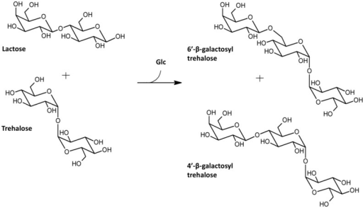 US20050107329 besides Relating starch and sucrose synthetic pathway together with Disaccharide as well File Sucrose Inkscape furthermore Disaccharides. on disaccharides trehalose