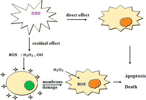 The schematic diagram for illustrating the inactivation effect and mechanism for the DBD treatment of algal cells.