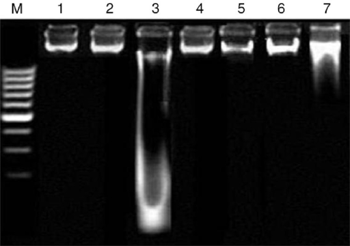 Agarose gel showing DNA damage by CCl4 and protective effects of various fractions of C. opaca fruits in renal tissue. Lanes from left: (M) low molecular weight marker, (1) control, (2) DMSO+Olive oil group, (3) CCl4 group, (4) silymarin+CCl4 group, (5) MFC+CCl4 group, (6) EFC+CCl4 group, (7) HFC+CCl4 group.