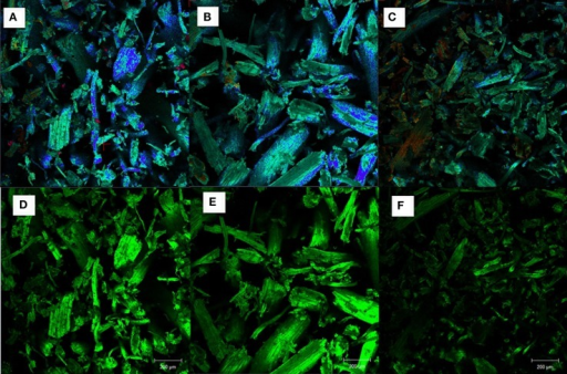 Confocal fluorescence images of AGB samples: (A,D) untreated, (B,E) alkaline pretreated, and (C,F) dilute acid pretreated.