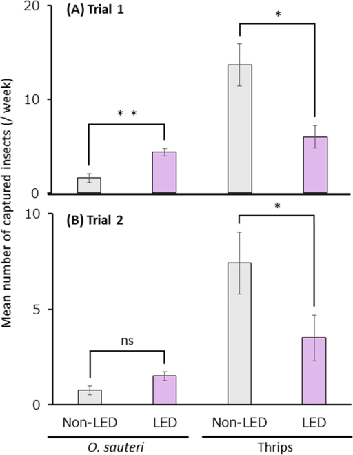 The densities of Orius sauteri and thrips in plots with and without LED.Mean numbers of O. sauteri and thrips captured per week in Trial 1 (A) and Trial 2 (B). Vertical bars indicate standard error (A, n = 12; B, n = 12). Statistical analysis was by the Mann-Whitney U-test. * and ** indicate statistical significance at p < 0.05 and p < 0.01, respectively.