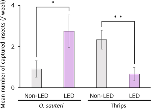 The densities of Orius sauteri and thrips in plots with and without LED.Mean numbers of O. sauteri and thrips captured per week after turning on the LED light source in Trial 3. Vertical bars indicate standard error (n = 12). Statistical analysis was by the Mann-Whitney U-test. * and ** indicate statistical significance at p < 0.05 and p < 0.01, respectively.