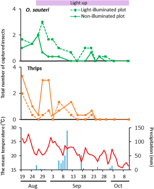 Population trends for Orius sauteri and thrips.Total number of O. sauteri (upper panel) and thrips (middle panel) captured in Trial 3. The mean temperature and precipitation in Tsukuba City during the experimental period (lower panel). LED light was turned on beginning August 26.