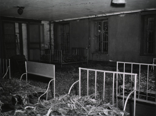 <p>View of a heavily-damaged room furnished with single beds without mattresses. Roots and straw are piled on the bed springs.</p>