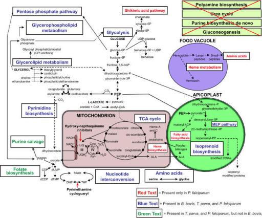 steroidogenesis pathway