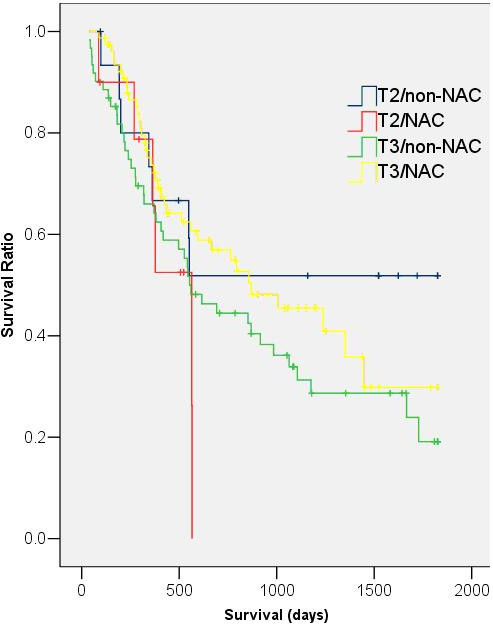 Kaplan-Meier survival curves of NAC and non-NAC patients with T2 and T3 disease. (T2/non-NAC: median survival: 552 days, 95% CI = 409–695 days; T2/NAC: median survival: 565 days, 95% CI = 361–769 days; T3/non-NAC: median survival: 554 days, 95% CI = 356–752 days; T3/NAC: median survival: 870 days, 95% CI = 407–1333 days; p = 0.65).