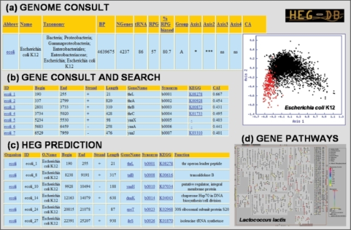 Outputs provided from the HEG-DB: (a) 'Genomes consult' shows the list of all the genomes available in the database. In this section, users can select one or more genomes to see the statistical parameters (including the codon usage correspondence analysis plot used to predict translational selection) of the selected genomes. (b) The statistical and functional information available in each gene is accessible by a global consult of a specific genome or by a search engine. This section includes the CAI value of each gene. (c) List of predicted highly expressed genes in each genome. This section includes functional and positional information about each predicted gene. (d) The metabolic pathways, which involve highly expressed genes can be viewed through the 'pathway tools overview expression viewer' from the BioCyc database. In addition, this tool can be used to mark all genes according to their CAI on the pathway maps.