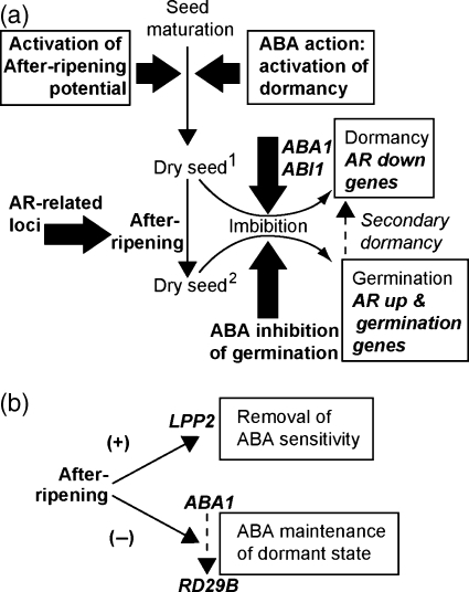 mechanism of seed dormancy pdf