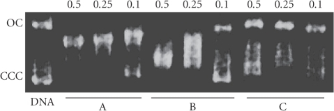 Eletrophoretic mobility pattern of pBR322 plasmid DNA incubated with thecomplexes: lane A: cisplatin; lane B: [Pd(9AA)(μ-Cl)]2; lane C: 9AA.