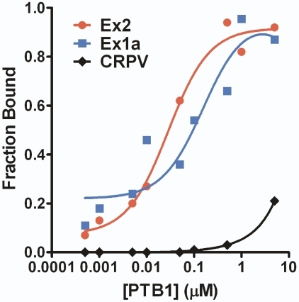 The mouse TrkB 5′ leaders bind PTB1 protein.Purified PTB1 was added in increasing amounts to radiolabeled RNA containing Ex1a, Ex2, or the negative control CrPV IRES. A Langmuir plot was created using the calculated fraction bound. Disassociation constants of 85 nM and 46 nM were determined for the PTB1 interaction with Ex1a and Ex2, respectively.
