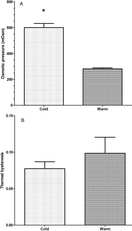 Osmotic pressure in vitreous fluid in cold versus warm fish. A: Osmotic pressure in vitreous fluid in smelt at warm (8–10 °C) and cold (<0.5 °C) temperatures. B: Thermal hysteresis in vitreous fluid in smelt at warm (8–10 °C) and cold (<0.5 °C) temperatures. The values are presented as mean±SEM with n=3 for the warm group and n=5 for the cold group. * indicates a statistically significant difference.
