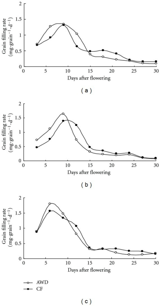Grain filling rate after flowering under AWD and CF in 2010 DS. Three varieties IR72 (a), IR82372H (b), and SL-8H (c) were used in the experiment at high N level.