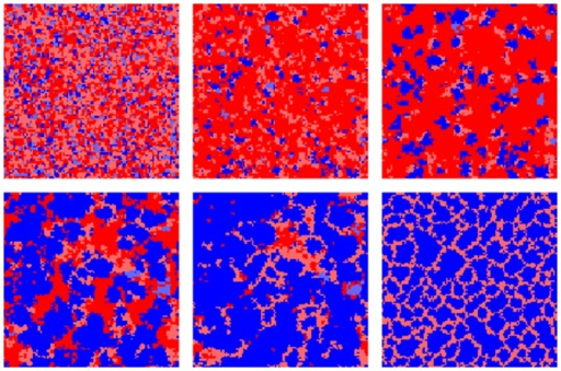 Snapshots of agent configurations illustrating the co-evolution of perspectives and strategies.The snapshots are taken after 3,20,40,70,100 and 1000 sweeps (left to right) with parameters  and . Cooperators are blue, defectors red, darkness of the colour indicates perspective, dark indicates long term () and bright indicates short term (. See fig. 7 for averaged trajectories.
