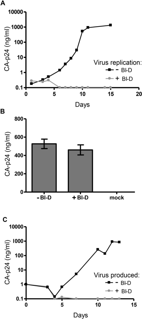 Impact of BI-D on HIV-1 replication and production.A. SupT1 cells were infected with HIV-1 LAI and cultured in the absence or presence of BI-D (700 nM, 5x EC50). B. 293T cells were transfected with HIV-1 LAI plasmid, cultured with or wihout BI-D, and virus production was measured after 48 h. Mock treated cells were transfected with control plasmid pBluescript-SK+. Average values with SD are shown (N = 3). C. The virus stock produced in (B) was used for infection of SupT1 T cells. No additional BI-D was added during culturing. The CA-p24 level in the culture medium was monitored by ELISA.