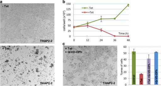 Tetracycline-induced cell death inCasp2-engineered T-REx-293 cells. (a) Uninduced cells from clone THAP2-2 (a representative clone of T-REx-293 cells carrying the elective cell death module) showed normal growth, but extensive cell death when induced with tetracycline (1 μg/mL) for 48 h. (b) Numbers of adherent, uninduced and induced THAP2-2 cells were monitored over 48 h after induction in 24-well plates. Standard deviation bars: n = 3. (c) When medium was supplemented with caspase inhibitor Q-VD-OPh (50 μM), cell death was largely blocked. Graph: percentages of area covered by adherent cells in various image fields: under normal growth conditions, after tetracycline induction, after tetracycline induction in the presence of Q-VD-OPh or in the presence of Q-V-D-OPh alone. Scale bars: 100 μm.