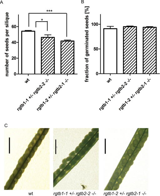 Male gametophyte defect in the Atrgtb1Atrgtb2 double mutant. (A) Number of seeds per silique, n>20; bars represent mean ±SE. (B) Frequency of germination of seeds from self-pollination of Atrgtb1+/–Atrgtb2–/– plants, n>250. Statistical significance analysed by Student t-test, *P<0.05, ***P<0.001. (C) Siliques of an Atrgtb1+/–Atrgtb2–/– plant after self-pollination; scale bar=1mm. (This figure is available in colour at JXB online.)