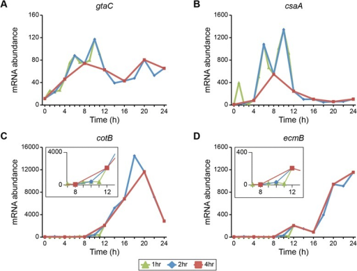 Temporal resolution affects the interpretation of transcription profiles. The standardized mRNA abundance of four developmentally regulated genes (y-axis) is plotted versus time (hours, x-axis). Data are from the filter development experiment. For each gene—gtaC(A), csaA(B), cotB(C), and ecmB(D)—expression values are included for time points at 1-, 2- and 4-hour intervals, as indicated in the legend below the figure. Each data point represents the average of 2 independent biological replicates. The y-axis scale varies between plots. The insets in (C) and (D) highlight the 8 h – 12 h time frame.
