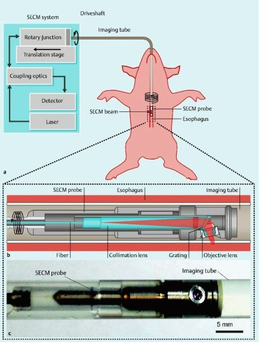 Schematics and photo of the SECM endoscopic imaging setup. a Overview of the SECM endoscopic imaging setup. An SECM endoscopic probe is inserted into an imaging tube, which is a transparent semi-flexible plastic tube. The imaging tube is introduced to the esophagus transorally. A SECM beam is focused into the esophageal tissue. While SECM images are continuously acquired, the SECM probe is helically scanned by a rotary junction and translation stage to image a large area of the esophagus. b Detailed schematic of the SECM probe optics. In the probe optics, light from the fiber is collimated by a collimation lens and diffracted by a grating. The diffracted light is focused by an objective lens (water immersion; numerical aperture = 0.5) into a 280-µm-long line. c Photo of the SECM optical probe inside the imaging tube. The diameter of the probe is 5.9 mm, and the rigid length is 30 mm. The outer diameter of the imaging tube is 7.0 mm.