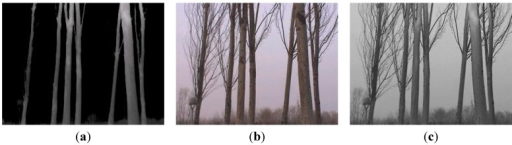The corresponding visual information of the forest area: a visible image (a); an infrared thermal image (b); a fused image with clarity enhanced and more abundant captured information (c).