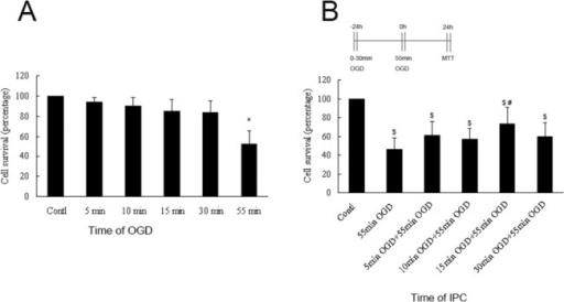Determination of the lethal OGD time and suitable IPC intervention in hippocampal neurons.(A) Time-dependent effects of hypoxia on neuronal death. Hippocampal neurons were exposed to OGD conditions for 0, 5, 10, 15, 30, or 55 min, followed by quantification of cell survival with MTT assays 24 h later. (B) Different OGD times conferred protection against the deleterious effects of 55 min of OGD. Hippocampal neurons were exposed to sublethal (0–30 min) OGD followed by 55 min of lethal OGD 24 h later. Values are given as percentages compared with cell survival in neurons maintained under normoxic conditions. Error bars denote SDs. *P < 0.01 compared with cells maintained under OGD for 0–30 min. $P < 0.01 compared with cells maintained under normoxic conditions. #P < 0.05 compared with cells maintained under 55 min of OGD.