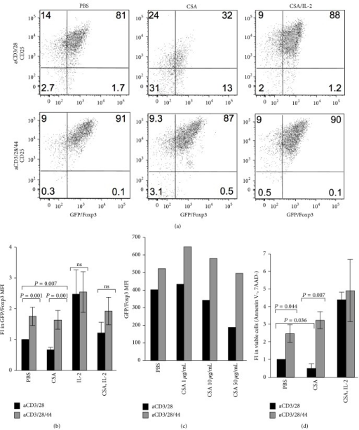 CD44 cross-linking and IL-2 both promote Foxp3 expression and Treg persistence despite CSA treatment. (a) Representative flow cytometric analysis of CD25 labeled and GFP/Foxp3+ cells after 3 days in culture in the presence of anti-CD3 and anti-CD28 alone or with the addition of anti-CD44, and with or without CSA (50 ng/mL) alone or together with IL-2 (20 IU/mL). (b) Fold increase (FI) in GFP/Foxp3 MFI after 3 days of culture in the presence of anti-CD3 and anti-CD28 alone or in conjunction with anti-CD44 Ab, with or without CSA (50 ng/mL) alone or together with IL-2 (20 IU/mL). N = 4 independent experiments, among these are included Figure 2(a). (c) Fold Increase in GFP/FoxP3 MFI in the presence of anti-CD3 and anti-CD28 alone, or in conjunction with anti-CD44 and increasing concentrations of CSA. Data are representative of two experiments. (d) Fold increase in the fraction of viable GFP/FoxP3+ cells (Annexin V-, 7AAD-) upon culture with aCD3/28 or aCD3/28/44 with or without CSA (50 ng/mL) alone or together with IL-2 (20 IU/mL). N = 4 experiments among these are included in Figure 2(a) and the other experiments are in Figure 2(b).
