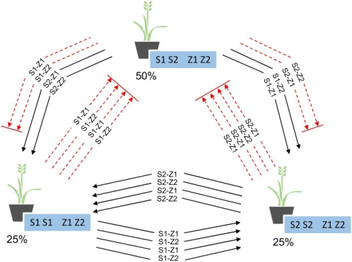 Proportion of plants in each of the three genotype groups present in Se1, and the compatible (solid black lines) and incompatible (dashed red lines) pollen-specific SI alleles between each group.