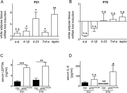 Early postnatal hyperalimentation (pHA) and early-onset obesity lead to transient increased mRNA expression of adipocytokines and persistent greater circulating concentrations of serum leptin and IL-6 in murine offspring.(A,B) Total white adipose tissue (WAT) mRNA expression of genes encoding Il-1β, Il-6, Il-23, Tnf-α, and leptin was assessed by quantitative real-time PCR at postnatal day 21 P21 (A) (Ctrl: n = 9 from 5 litters; pHAmouse: n = 11 from 6 litters) and P70 (B) (Ctrl: n = 9 from 6 litters; pHAmouse: n = 9 from 6 litters). The Ctrl was normalized to 1; early postnatal hyperalimentation (white bar; pHAmouse group). (C) Serum level of leptin (ng/ml) at P21 (Ctrl: n = 8 from 5 litters; pHAmouse: n = 8 from 6 litters) and at P70 (Ctrl: n = 7 from 6 litters; pHAmouse: n = 7 from 4 litters). (D) Serum level of IL-6 (pg/ml) at P21 (Ctrl: n = 7 from 5 litters; pHAmouse: n = 5 from 5 litters) and at P70 (Ctrl: n = 4 from 3 litters; pHAmouse: n = 5 from 2 litters). pHAmouse group: white bar, Ctrl: black bar. Mean ± SEM; Mann Whitney test (*), two way ANOVA test and Bonferroni posttest (#); *,#p < 0.05, **p < 0.01, ***p < 0.001; n.s. = not significant.
